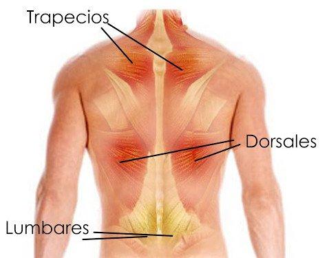 partes espalda